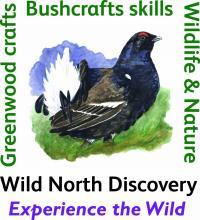 Wild North Discovery © Wild North Discovery