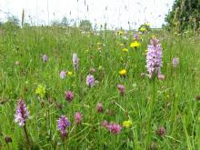 Species rich meadow © NPAP/Rebecca Barrett