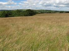 Hay meadow in Wolsingham © NPAP/Rebecca Barrett