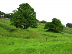 Trees at Allenheads © NPAP/Elizabeth Pickett
